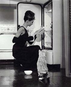 cats in fridges & shoes in flower