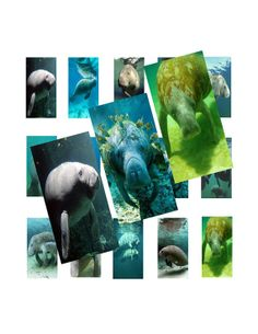 Items similar to Manatees Domino Images Digital Collage 026 on Etsy Manatees, Digital Collage, Handmade Gifts, Movie Posters, Painting, Vintage, Etsy, Art, Kunst