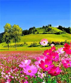 Field flowers - flowers & nature background wallpapers on desktop Beautiful Photos Of Nature, Beautiful Flowers Wallpapers, Beautiful Nature Wallpaper, Amazing Nature, Nature Photos, Beautiful Landscapes, Beautiful World, Beautiful Gardens, Beautiful Places