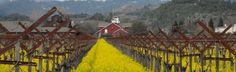 Napa Valley Bed & Breakfast - Silverado Resort - California Wine Country Packages