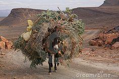 Mule in Atlas