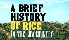 Watch an Animated History of Rice in South Carolina