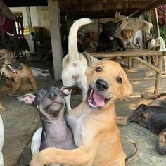 What a crazy crew?! 😅🐶 #dog #doglover #doglife #doggo #dogscrew #pes #stastni #crazy #happy #hafhaf #svetkuriozitsk Animals Images, Funny Animals, Sleeping Animals, Post Animal, All Friends, Best Face Products, Magazine Art, Your Best Friend, Dog Life