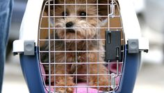 Is your pet safe flying in cargo? Dog Cages For Cars, Cheap Dog Cages, Air Travel Tips, Dog Travel, Travel 2017, Travel Guide, Pet Transport, Stress, Fear Of Flying
