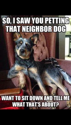 So I saw you petting