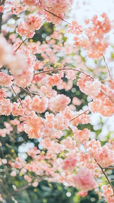 Beautiful Flowers Wallpapers, Beautiful Nature Wallpaper, Pretty Wallpapers, Wallpapers Of Nature, Beautiful Images, Aesthetic Backgrounds, Aesthetic Iphone Wallpaper, Aesthetic Wallpapers, Spring Aesthetic