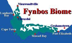 Map Port Elizabeth, Biomes, Biology, Map, Poster, Location Map, Maps, Billboard, Ap Biology