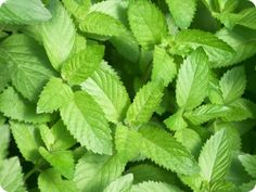 Minty Facial Mask  Ingredients:2 tablespoons toothpaste (use the paste variety, not gel), 3 tablespoons warm water, 6 finely chopped mint leaves  Squeeze toothpaste into a bowl. Add the water and stir into a paste. Add in the chopped mint. Rub the mixture gently onto face while avoiding the eyes. Leave the mixture on the face for 10 minutes or until dried. Rinse with warm water.