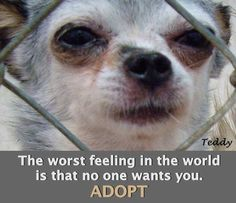 ADOPT DON'T SHOP. Let's show every dog that they are wanted. #NMDR #rescue