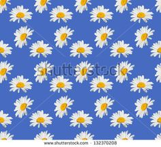 Vector seamless texture background for wrapping paper. Chamomile daisy flower decoration pattern design - stock vector
