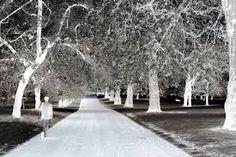 Αποτέλεσμα εικόνας για beautiful pictures forest white and black