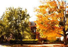 Across the Street Autumn 2014 by Stephen Robinson on 500px