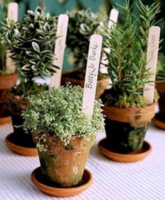 Herbs can be used in centerpieces, as favors, as garnishes, and even in bouquets and boutonnieres . Here are some of my favorite herb wedding details. Potted Plant Centerpieces, Centerpiece Ideas, Placecard Ideas, Inexpensive Centerpieces, Table Arrangements, Herb Pots, Succulent Planters, Succulents Garden, Wedding Favors For Guests