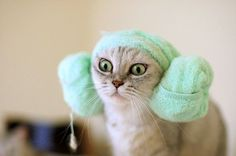 """Dis my Princess Leia impression."" I'M GOING TO DO THIS TO MY KITTEH! I just have to figure out how...."