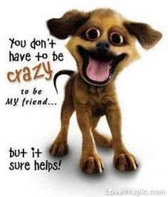you dont have to be crazy to be my friend funny quotes quote lol friendship quotes funny quote funny quotes humor