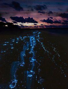Senja di Sea of Stars, Vaadhoo Island, Maldives | 26 Tempat Ajaib yang Ada di Bumi!!