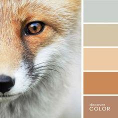 Fox | Discover Color Palette