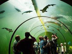 Kudy z nudy - Živá voda - prosklený tunel pod vodou v Modré u Velehradu Czech Republic, Aquarium, Places, Travel, Goldfish Bowl, Viajes, Aquarium Fish Tank, Destinations, Traveling
