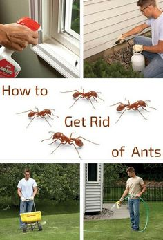 How to Get Rid of Ants: Put an end to most ant problems with inexpensive products from the home center or hardware store, and save the expense of hiring an exterminator. http://www.familyhandyman.com/pest-control/how-to-get-rid-of-ants
