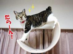 月と猫|うにオフィシャルブログ「うにの秘密基地」Powered by Ameba