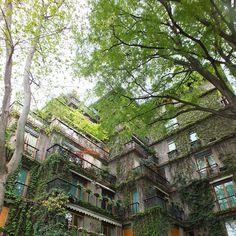 #urbangardening / greens in Milan . SOYZ-blog