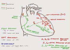 Arteries In The Heart Diagram Hunting The Culprit 2 Coronary Artery Anatomy - Pondering Em