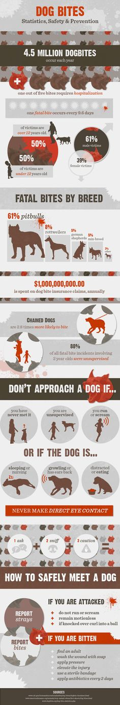 Surprising Dog Bite Facts And Prevention Tips - Infographic design #facts - More info about cat at Catsincare.com!