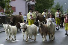 Alpabfahrt, Urnäsch: Den Zug führen Kinder mit den Ziegen an © Hans Hürlemann, Urnäsch, 2001 Animals, Goats, Swiss Guard, Train, Textiles, Kids, Animales, Animaux, Animal