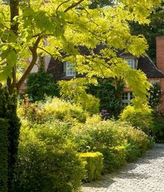 Chartreuse foliage lights up a garden in the book Louis Benech: Twelve French Gardens