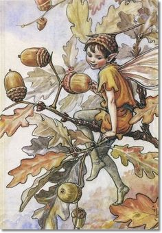 """Autumn ~ Nut ~ The Acorn Fairy ~ Scampering along an old oak tree, The acorn fairies dance with glee. They skip and run on tippy toe, Then jump to the ground far below. Wearing cloaks of gold and green, Trying hard to not be seen, They all hold hands and in a ring, Round and found they go and sing. """"Autumn is here, Autumn is here, Hei di ho, And away we go!"""" Off through the grass they run and run, Their October fun has just begun. -Susanne Down"""