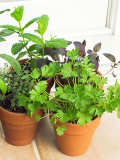 Plant an Indoor Vegetable Garden