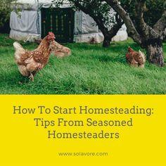 How To Start Homesteading: Tips From Seasoned Homesteaders featuring 4 homesteaders including Trayer Wilderness