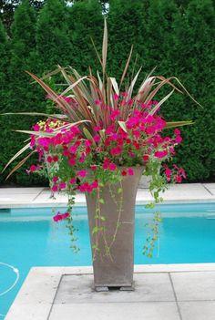 Flores en la piscina