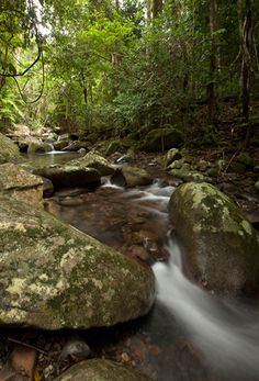 Daintree Rainforest, Australia Romantic Honeymoon, Romantic Getaway, Places To See, Places Ive Been, Honeymoon Getaways, Daintree Rainforest, Honeymoons, October 2013, Tropical Paradise