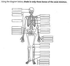 dffd03ee6dee05a16597f19e2bd327d0 unlabeled human skeleton diagram human anatomy organs pinterest