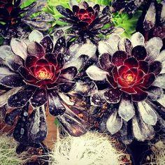 #xochimilco #mexico (at Mercado de Plantas y Flores Cuemanco)