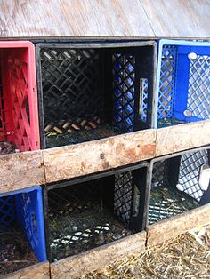 Milk crate nesting boxes for mom and her silly chickens