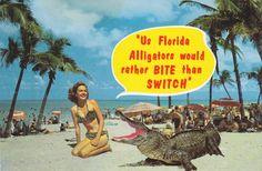 Florida Alligators Would Rather BITE Than SWITCH- 1950s Vintage Chrome Postcard- Beach Beauty- Leopard Bikini- Cheesy Souvenir- Ephemera