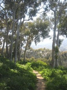 this trail begins at PV Drive & Via Anita, behind the Palos Verdes Estates sign, across from the woodchip trail | Yelp