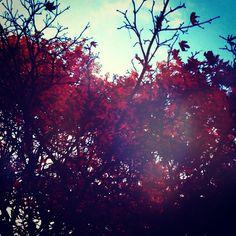@m_love_ny_yokohama-#cameranapp #cameran