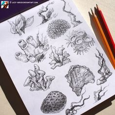 tattoo underwater sealife Sketches of corals by lazy-brush on DeviantArt Coral Reef Art, Sketches, Animal Drawings, Coral Drawing, Sketch Book, Drawings, Coral Draw, Coral Tattoo, Ocean Tattoos