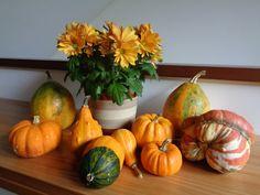 Crisantemi & zucche - Fall home decoration