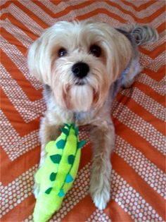 My dog Otiz. Bev, Dearborn Heights, MI - 8/17/2015