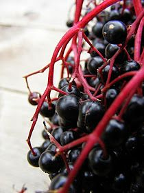 Edible Flowers, Jelly, Fruit, Food, Baking, Photos, Mint, Elder Flower, Pictures
