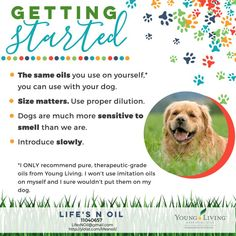 yldist.com lifesnoil wp-content uploads sites 6452 2017 05 5-Dogs-Getting-Started-777x777.jpg