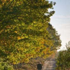 Ontdek onze natuurgebieden | Agentschap voor Natuur en Bos