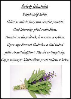 šalvěj lékařská, babské ucho, sage Nordic Interior, Medicinal Herbs, Korn, Good Advice, Herb Garden, Life Is Good, Herbalism, Reflexology, Health