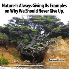 Photo: Nature is always giving us examples on why we should never give up.