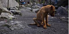 Des chiens abattus en masse pour lutter contre la rage : la polémique enfle à Bali