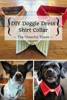 DIY Pet Stuff...  Upcycle collared dress shirts from the thrift store into a stylish DIY collar for your dog! Perfect gift for dog owners, or a fun craft for your own pet. SO EASY! No sew, 10 minutes or less.